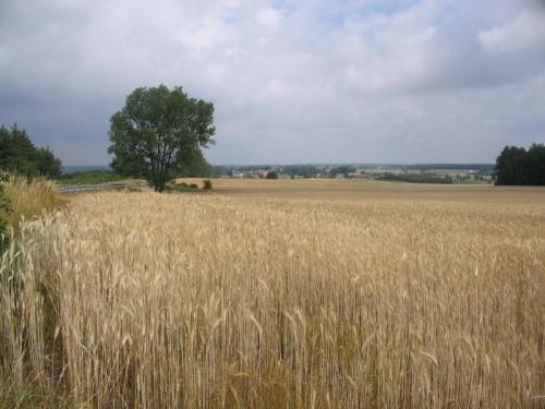 Pohled od opevněného postavení směrem k hranicícm Východního Pruska